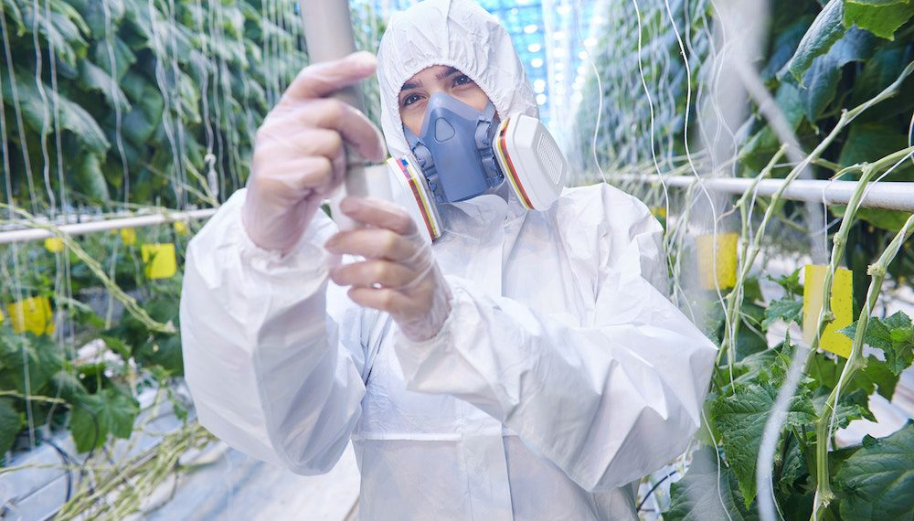 Waist up portrait of plantation worker wearing protective hazmat suit and mask in greenhouse of modern vegetable farm